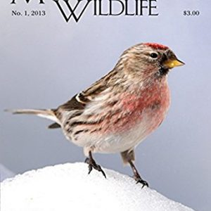 Massachusetts Wildlife