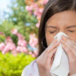 SLIT Therapy for Seasonal Allergies