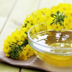 Vitamin E in canola, other oils hurts lungs: Northwestern University Study