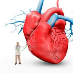 'Virtual Heart' to model heart failure: A PLOS Study