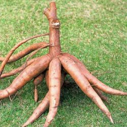 Top 10 Most Dangerous Fruits and Vegetables in the World