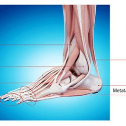Improving Ankle Mobility: Must To Minimize Injury