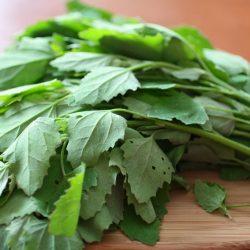 Chenopodium album or Bathua: A Miraculous Herb