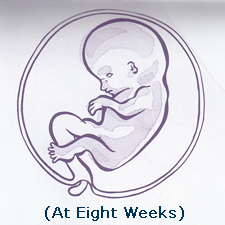 The vital first ten weeks