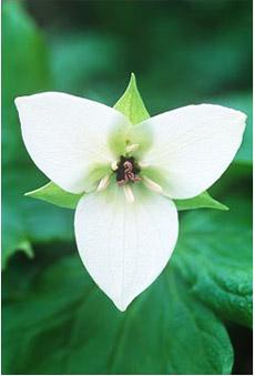 Herbs for Optimum Menstrual Health