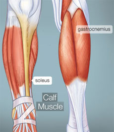 Sculpting the Calve Muscles