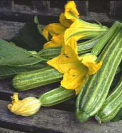 Zucchini : A multi health benefit powerhouse