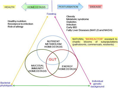 Gut Microbiota: An Influential Factor in Obesity