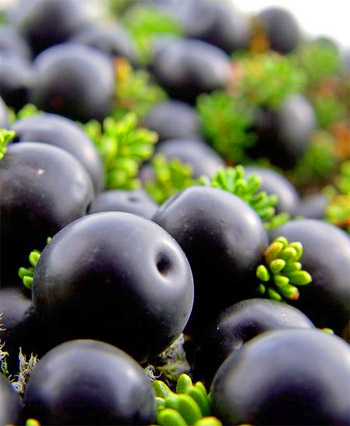 Crowberries