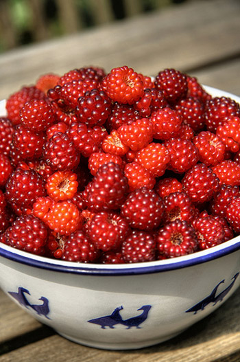 Health Benefits Of Wineberries