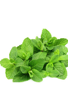 Peppermint: A Power House of Health Benefits