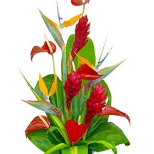 Hana Tropical Hawaiian Flowers