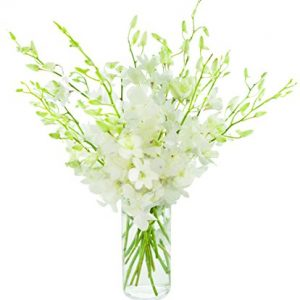 Nine White Dendrobium Orchids
