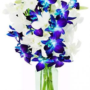 5 Blue Dendrobium Orchids & 5 White