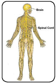spinal cord causing weakness and problems with sensation and vision