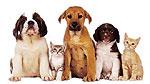الربو (asthma) Pets