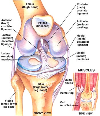 Preventing ACL Injury through Strengthening Exercises