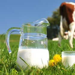 A Happier Cow Gives Healthier Milk