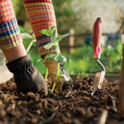 Turning Gardening Into A Complete Body Workout