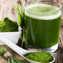 Barley Grass Extract: Recommended As A Part Of Yoga Diet