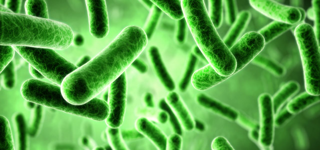 """Good"" Bacteria Significant In Weight Management - Women ..."