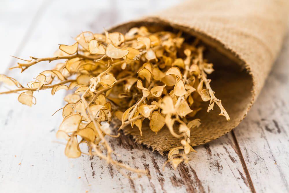Aphrodisiac Herbs