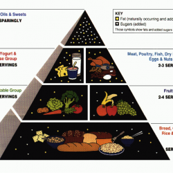 USDA Food Guide Pyramid