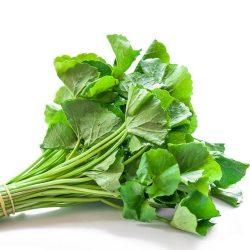Gotu Kola Root: A Miraculous Anti-Ageing Herb
