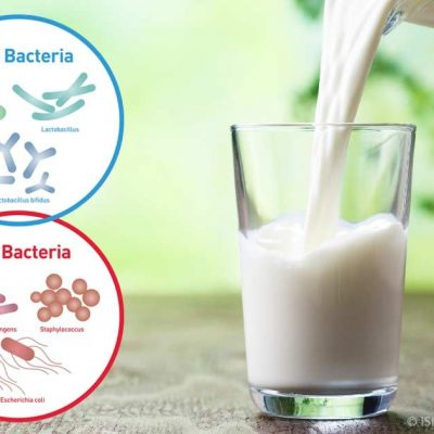 Bacteria in milk and beef linked to rheumatoid arthritis