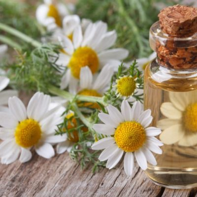 Top 10 Herbs to Manage Menopause