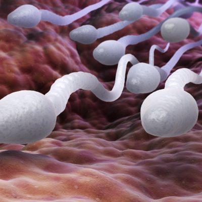 heatstress_sperm